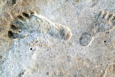 Ancient human footprints found in New Mexico may be oldest in North America